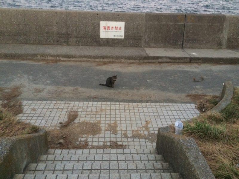 20190926 金沢区福浦 台風被害のその後